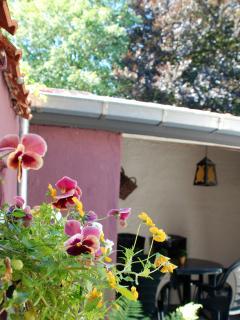 Terrace - pansies are blooming