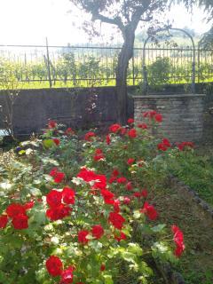 Wishing well and flowered garden. Pozzo dei desideri e giardino fiorito