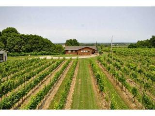 Beamsville Bench Vineyard Cottage on Wine Route