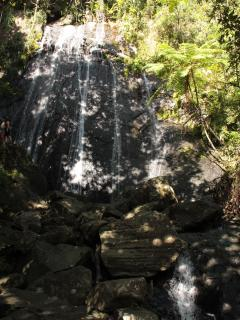Plan a trip to El Yunque, the only Rainforest in North America.