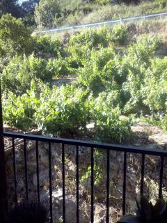 Vistas desde la terraza de la planta -1 'Bodega-Merendero'