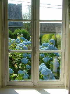 View from one of the living room windows; blue hydrangeas abound in Normandy!