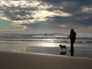 Pet Friendly 400m to Narrawallee Beach