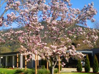 Grevillea Gardens Apartments, Bright