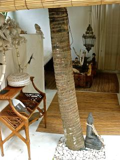 Palm tree in the tropical style living area