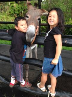 Kids can enjoy interacting with the donkey and other animals on our 3 acre homestead.