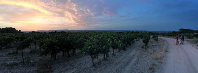 Drive, cycle or walk through the vineyards at sunset