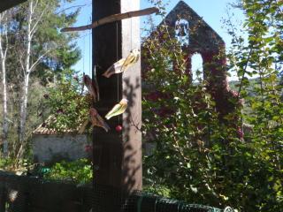 le beau clocher mur donnant dans notre jardin