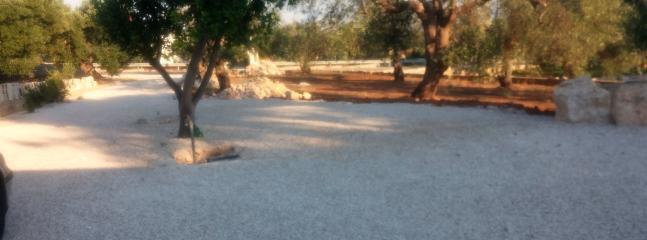 viale in ghiaia con alloro e alberi di ulivo