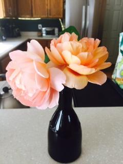 Fresh roses from the backyard