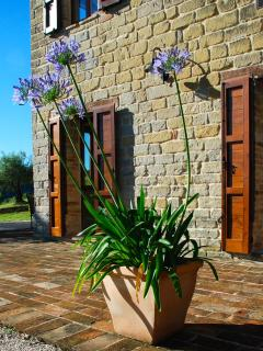 Agapanthus in Bloom on the House Terrace