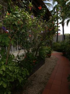 Path through tropical garden.