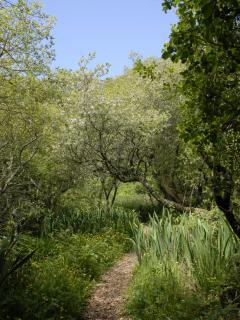 This track near the log cabin leads through the marsh and woods to the Pembrokeshire Coastal Path and the beach at Cwm...