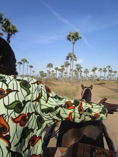 Excursion Sine-Saloum