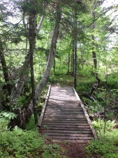 Bridge in middle of property on path through woods to beach