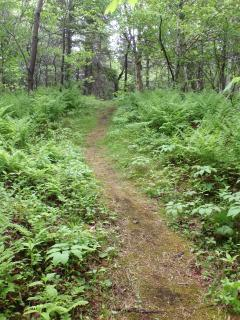 Path through woods to beach