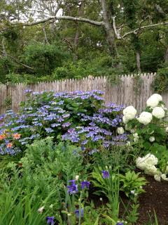 Mom's garden.