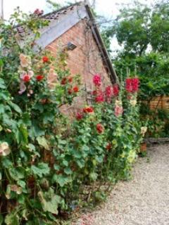 Colourful hollyhocks greet guests in the summer