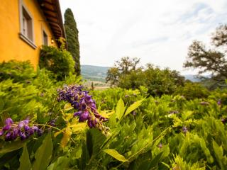 Charming Country Bed and Breakfast Close to Floren, Fiesole