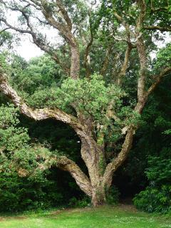 Cork Tree Cottage