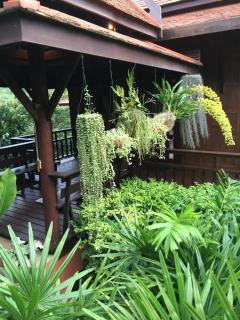 30 july 2015 lots off beautiful tropical plants