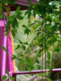 un environnement de verdure et de calme