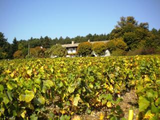 La Taniere, La Roche-Vineuse