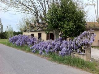 XVIIIe siècle Provençal Farmhouse, Cavaillon