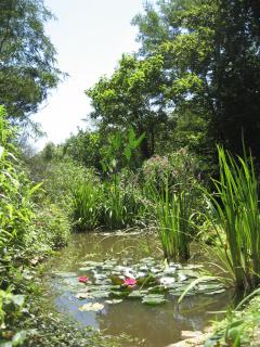 The water lilies of the pond