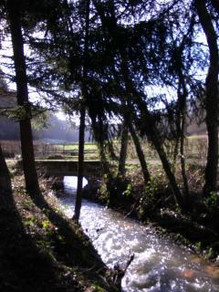 Petite rivière à truites à proximité du gîte