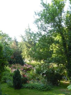 The rose garden with old conifers in the background