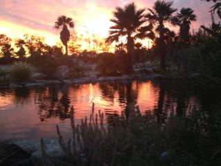 Desert Oasis w/ pond in pvt. 5 Acre Palm Grove