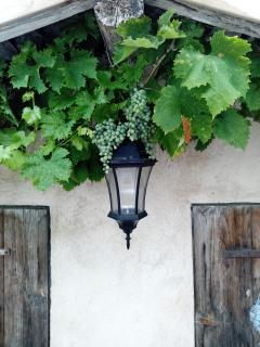 Grapevine over sunny patio