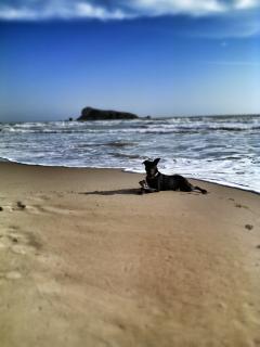 la spiaggia tutta per lui <3