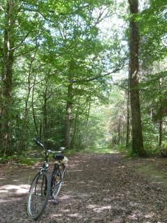 Hundaudaye Forest less than 3kms from the apartment 200kms of trails for walkers and cyclists