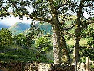 The view over the fells in Martindale through the old oak trees which line the gated private drive