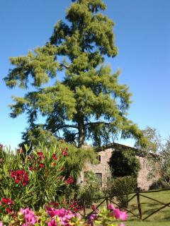Our hous lies inmidst of olive trees, lavender, roses and rosmary bushes