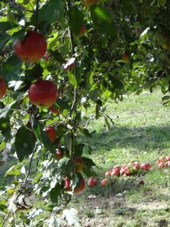 verse appels!