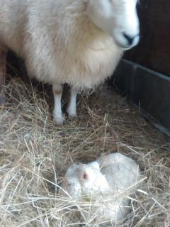 Proud mother with her lamb