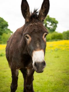 Guinness the donkey!