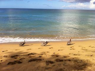 PELICANS CLEANING AFTER THE FISHERMEN. PERFECT FOR OUTDOOR ENTHUSIAST & NATURE LOVERS