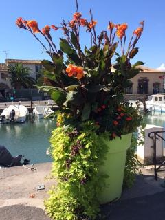 Beautiful Flower Pots on the Port