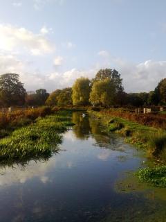 River through beautiful Bushy Park
