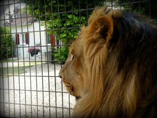 Gîte chez N'Gou le lion