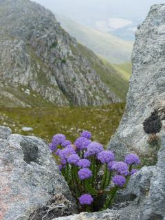 Colourful flowers grow out of the rocks