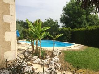 Les bananiers devant la piscine