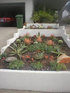 Lovely succulent garden in front of home