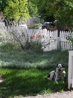 Daisy In Front Yard
