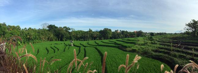 View of rice paddy fields from upper deck area.