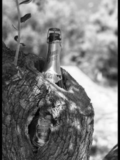 Lost champagne